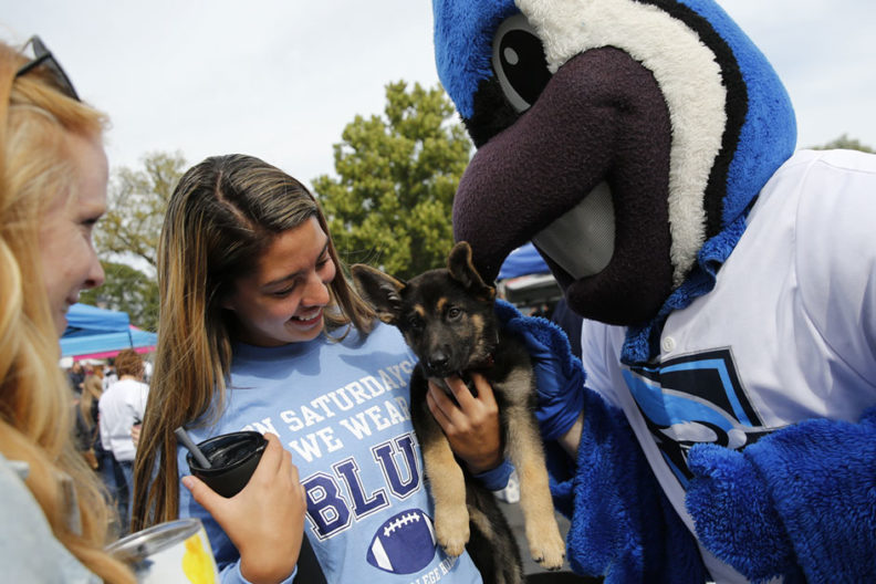 At Elmhurst College Homecoming 2019, an alumna cradles a puppy while mascot Victor E. Bluejay looks on.