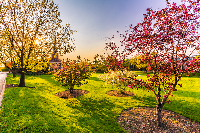 Photo of trees on the campus of Elmhurst University.